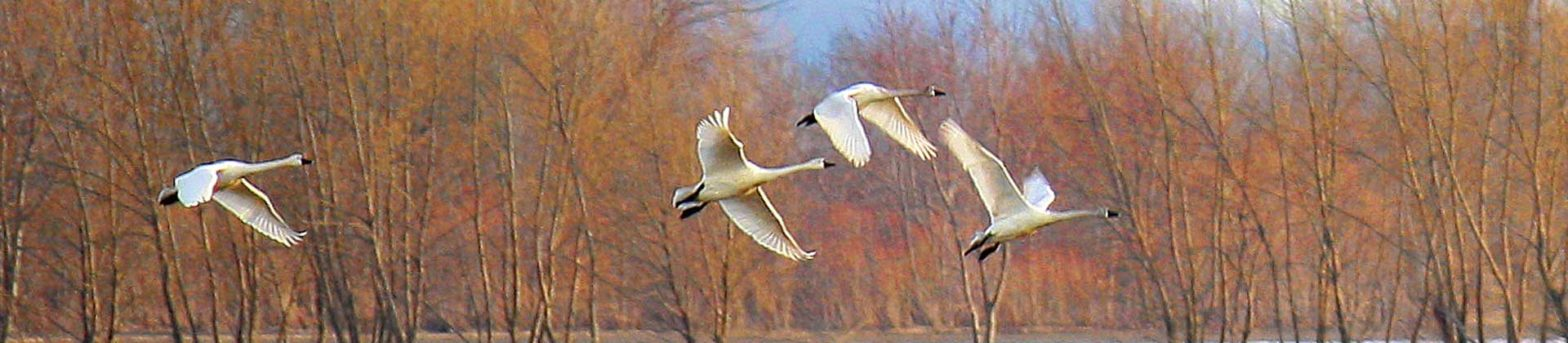 Birder featured image