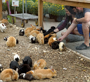 Photo: Feed the bunnies at Westland Greenhouses
